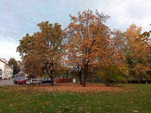 Smart ultra 7 - Testovací fotografie - stromy