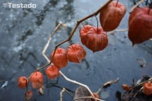 Nikon D3400 - fotografie