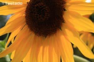 Canon EOS 1300D - fotografie