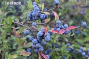 Canon EOS 200D - fotografie