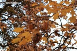 Recenze Canon EOS M100 - fotografie