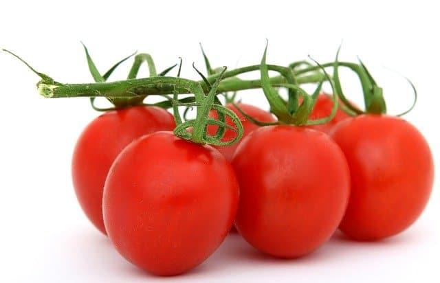 Pěstování rajčat v interiéru – krok za krokem, rady