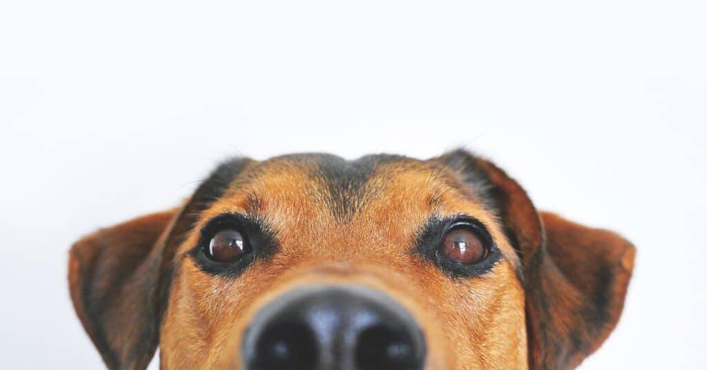 Jak vybrat pojištění pro psa - informace a návod