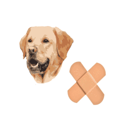 Nejlepší pojištění psa 2021 – recenze a srovnání pojišťoven
