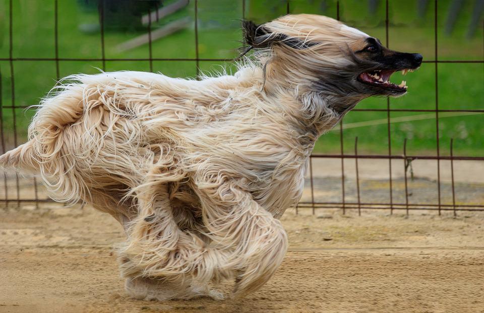 pojistka pro sportovní psy
