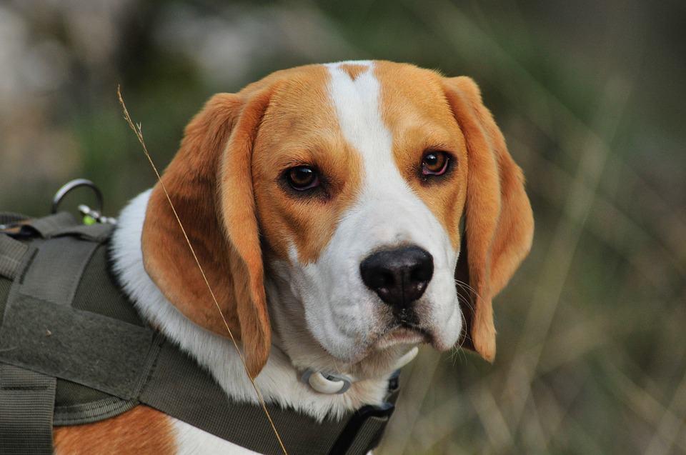 generali pojistka pro psy