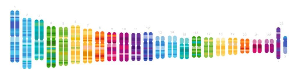 23andMe DNA test pary chromozomů recenze