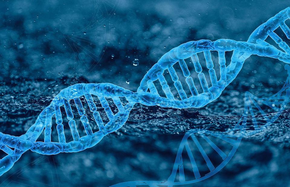 DNA test chromozomů recenze - Co je to DNA
