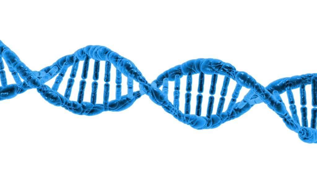 Jak vybrat DNA test původu - informace